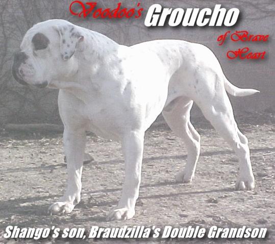 braveheartbulldogs